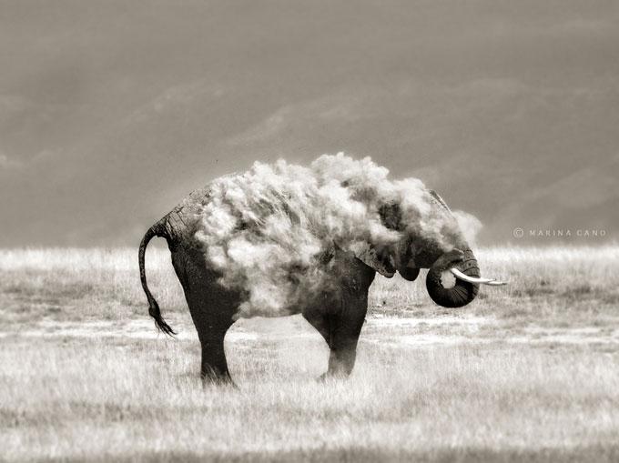 marina-cano-elephant