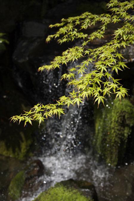 sutory japanese yamazaki distillery pure water