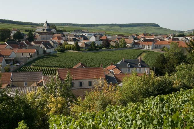 A landscape photograph of Krug Champagne's Clos du Mesnil Vineyard