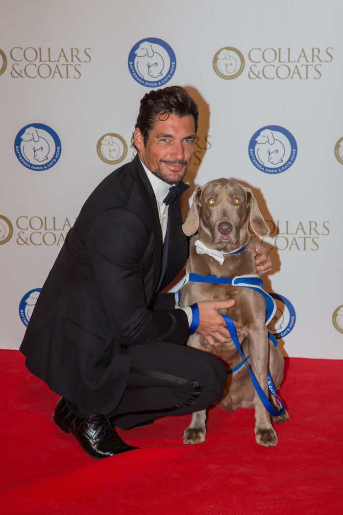 David Gandy at Battersea Dogs & Cats Home Collars & Coats Gala Ball 2013