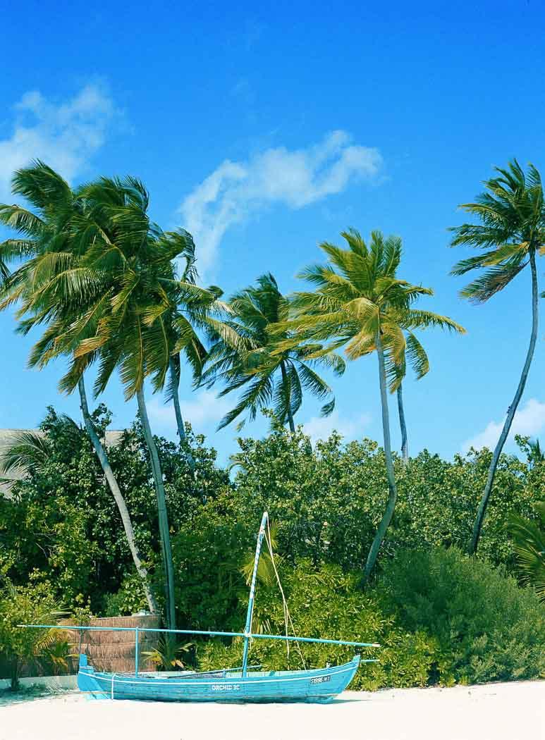 Island life, Cocoa Island
